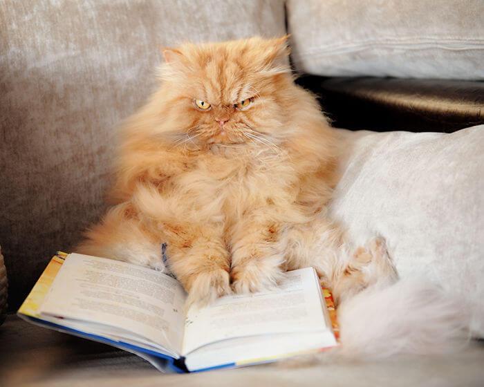 Gatos-mas-enojado-18